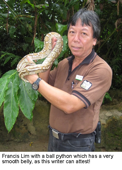 The reptile man